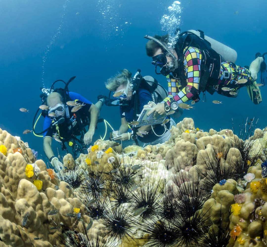 scuba diving manual free download