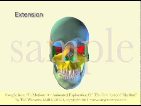 anatomy trains for manual therapists